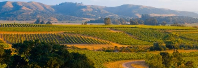 Unique Inns Guide to Sonoma Wine Country