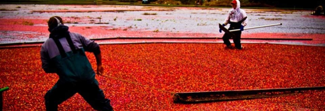 Explore the Land of West Coast Cranberries