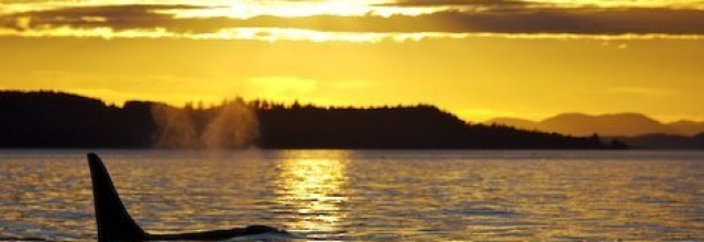 Live the West Coast Life on Orcas Island