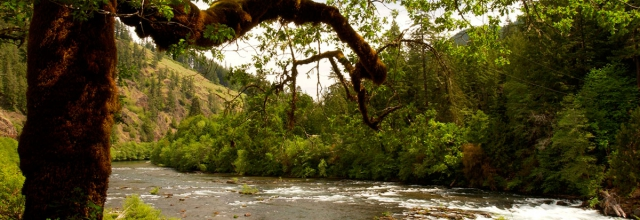Explore the Umpqua National Forest