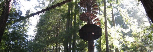 Zip through the Redwoods