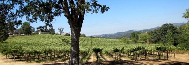 Take Advantage of Wine Tasting in the Tuolumne County